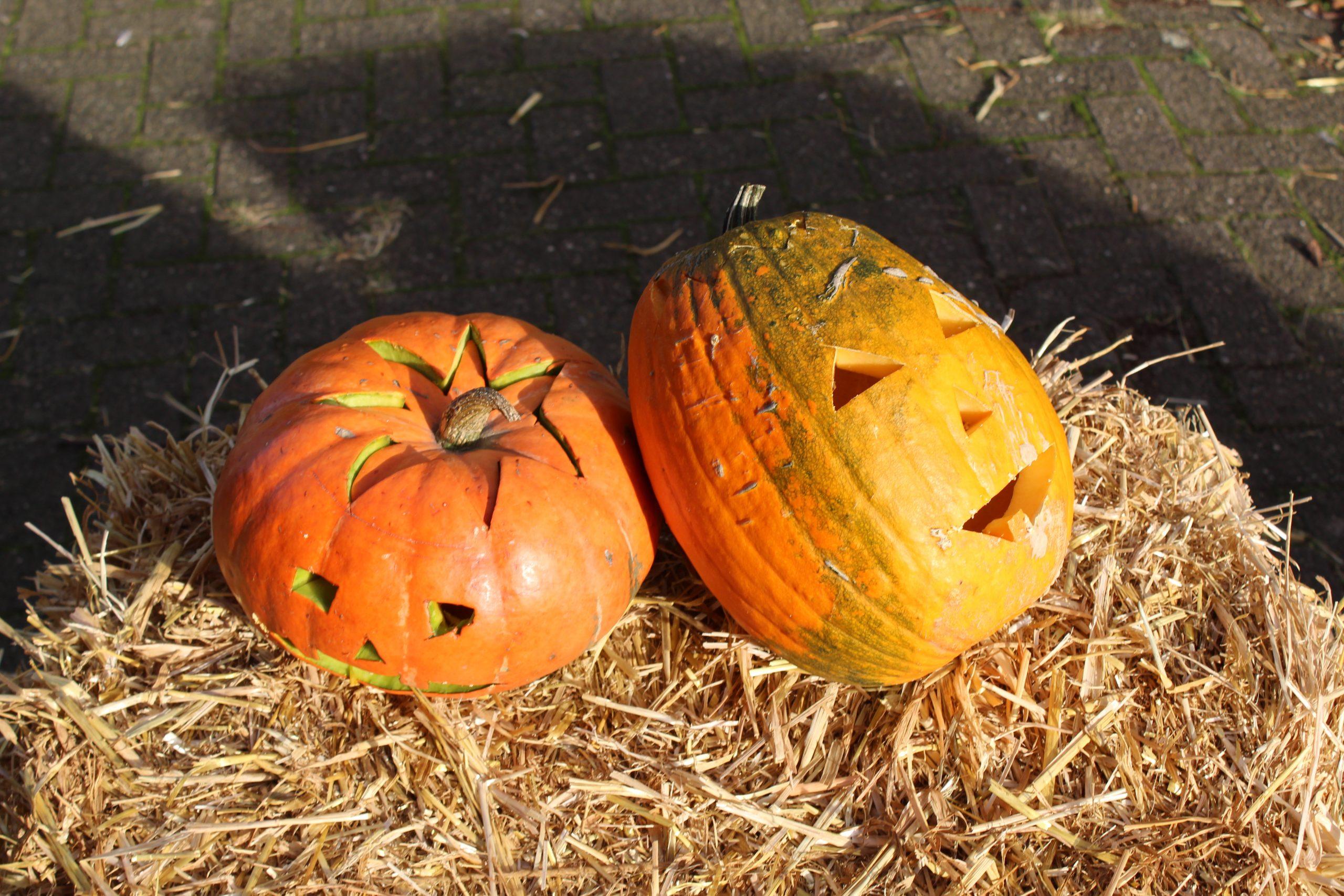 Halloween Fort kids